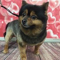 Moochi's Dog Salon and Supply