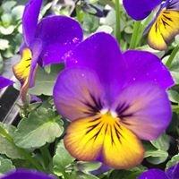 Gort Garden Centre & Church St Flowers