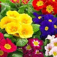 Colourful Creations Garden Centre Tulla