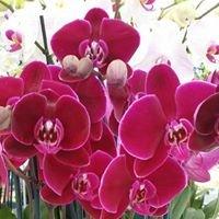 Trish's Orchids