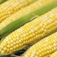 Mott's Famous Sweet Corn