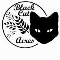 Black Cat Acres
