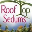 Roof Top Sedums LLC