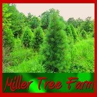 Miller Tree Farm