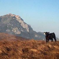 Cal Poly Beef Program