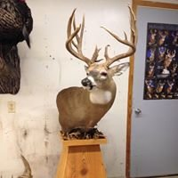 Thill Taxidermy