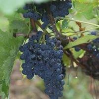 Salt Creek Vineyard