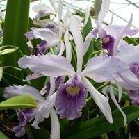 Seagrove Orchids | Seagrove, NC