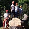 Whitney Tree Service