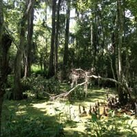 Jean Lafitte Swamp National Park
