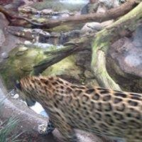 Audubon Zoo Swamp Exhibit & Cypress Knee Cafe
