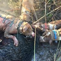 Backwoods Hog Hunters