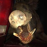 Swine Country HOG Hunting