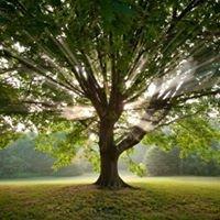 Brightman Family Tree Chiropractic