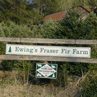 Ewing's Fraser Fir Farm