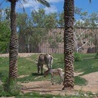 Phoenix Zoo Gift Store