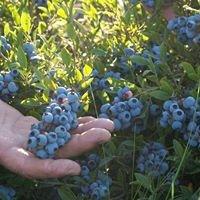 Ridgeberry Farm