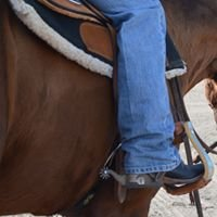 Kyle Grant Show Horses
