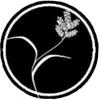 Amerasia Organization