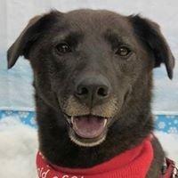 Every Dog's Dream Adoption Center