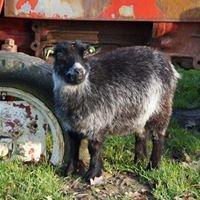 Kinderboerderij De Kiboe-hoeve Zwijndrecht