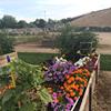 Idaho Veterans Garden