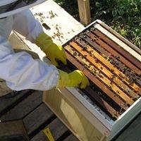 Otter Stream Wildflower Honey