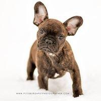 Paw Prints - Pet Portraits by Charlene - Pittsburgh Pet Photographer