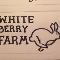 White berry farm and rabbitry