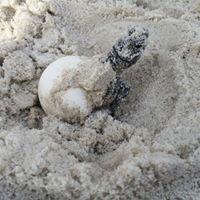 Share The Beach - Dauphin Island