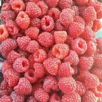 Raspberry DeLight Farms