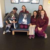Up & Running Canine Rehabilitation