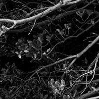 Yves Bachmann Photography
