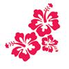 Hibiscus  sklep zielarsko-medyczny