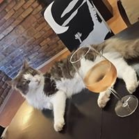 Cat Cafe Coffeeshop Budapest