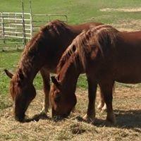 Hickory Knoll Farm