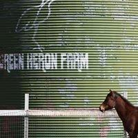 Green Heron Farm
