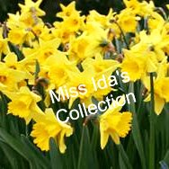 Miss Ida's Collection
