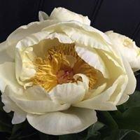 The Regent Florist