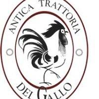 Antica Trattoria del Gallo