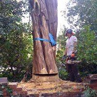 Alderwood Tree Care