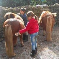 Les poneys du val d'emeraude ,