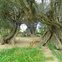 Fattoria didattica l'olivastro