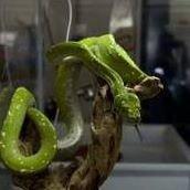 NWA Reptile Museum