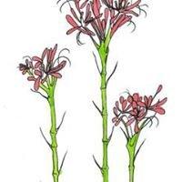 Menai Wildflower Group