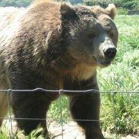 Bear creek lodge vacation rental