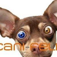 Cani-Feli