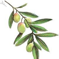 arteFakt Olivenölkampagne