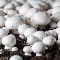Heilen mit Pilzen - MykoTroph Institut