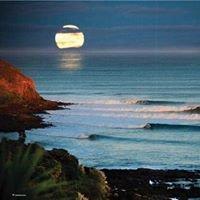 Surfgarden